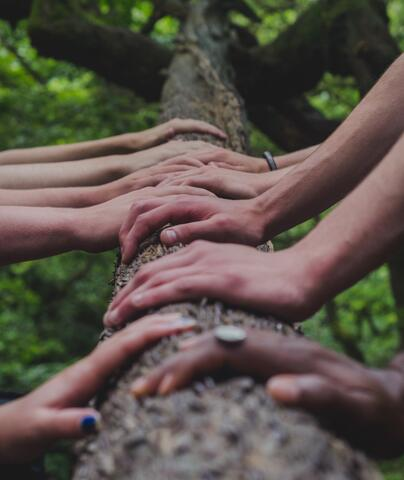 A photo of nine hands touching a tree trunk